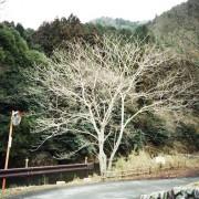 photo_film105