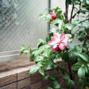 photo_film108