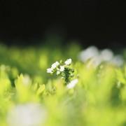 photo_film112
