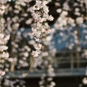 photo_film114