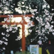 photo_film116