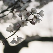 photo_film117
