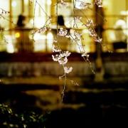 photo_film120