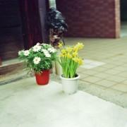 photo_film_ver2_52