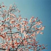 photo_film_ver2_70