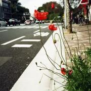 photo_film130