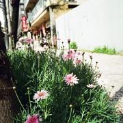 photo_film131