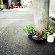 photo_film135