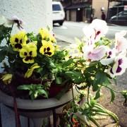 photo_film174