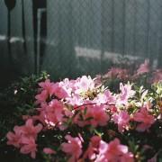 photo_film203