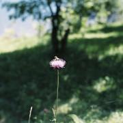 photo_film248