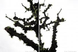 樹々万葉2011年-2012年