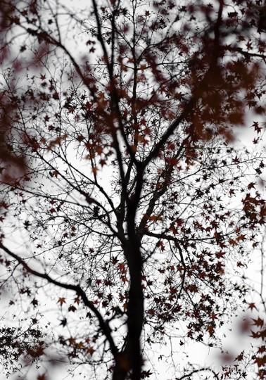樹々万葉2013年-2014年