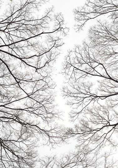 樹々万葉2014年-2015年
