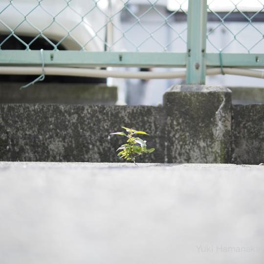 植物視点 in 小路