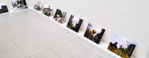 個展「植物視点」(Port Gallery T / 大阪)